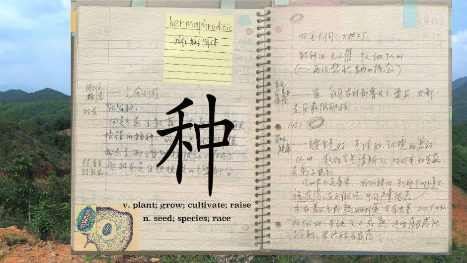 Xu Tan, Social Botany, project, 2013-, courtesy artist (1000x563)