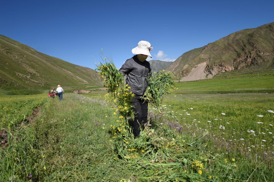 Arahmaiani, The Tibet Project (2010 – on-going)_3